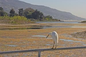 Malibu Lagoon 9