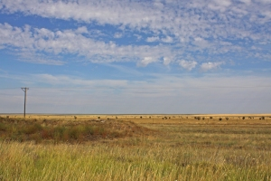 Panhandle landscape
