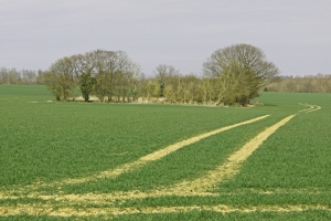 Field on St Edmunds Way