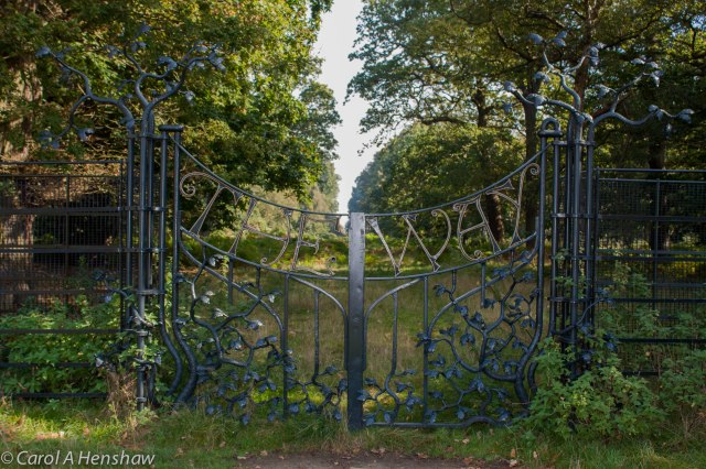 Gate Richmond Park Sept 2014-0059