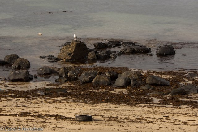 Seagull on beach Portstewart 8 Oct 2014 (1 of 1)