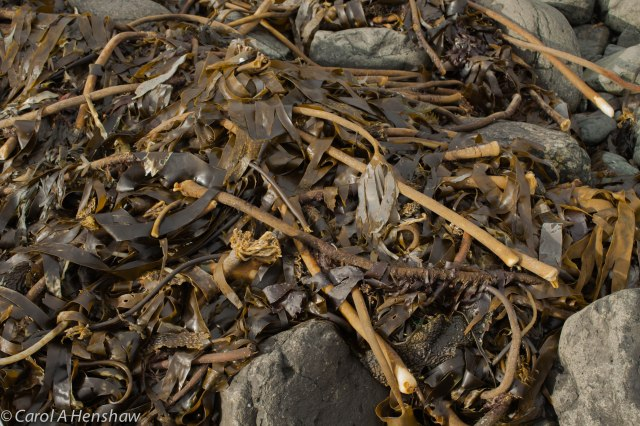 Seaweed on Beach Portstewart 8 Oct 2014 (1 of 1)