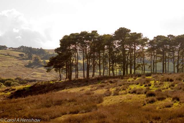 Tebay Landscape 4 October 2014 (1 of 1)