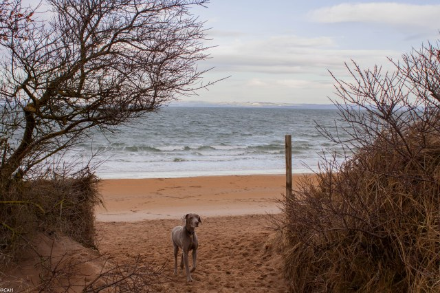 Flora at Gullane Bents 18 Jan 2015 (1 of 1)