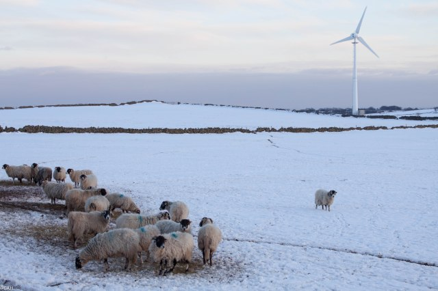 Sheep and Wind Turbine Peak District 2015 (1 of 1)