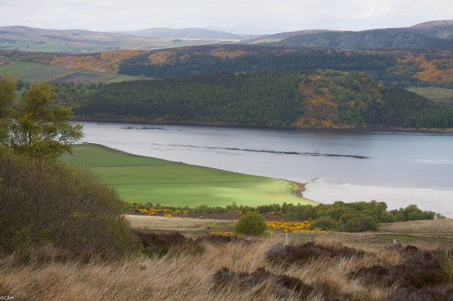 Dornoch Firth 1 30 May 2015 (1 of 1)