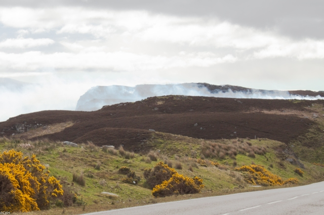 Burning the heather on road to Thurso 6 June 2015 (1 of 1)