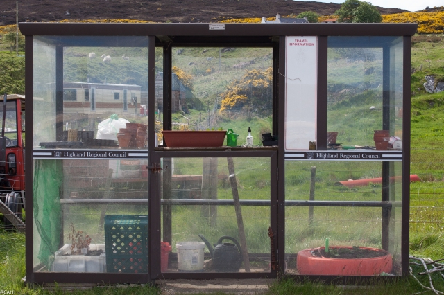 Bus shelter greenhouse Skerray 3 June 2015 (1 of 1)