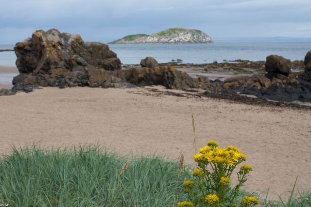 West Strand North Berwick (1 of 1)