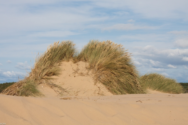 Dunes 6 Formby Point (1 of 1)