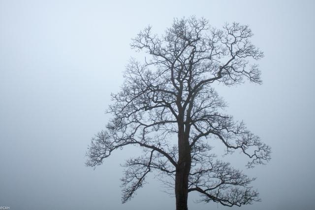 Smallwood mist 25 Feb 2016 (1 of 1)