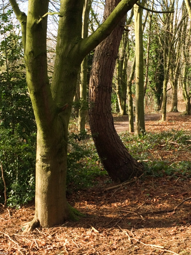 Trees 2 Astbury Mere (1 of 1)