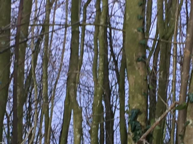 Trees 3 Astbury Mere (1 of 1)