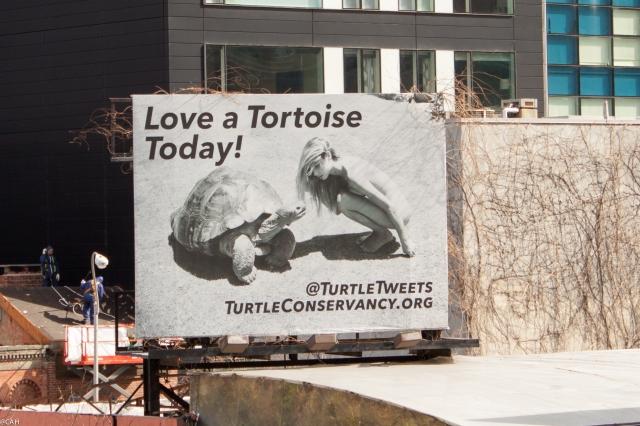 Love a tortoise 3 Mar 2016 (1 of 1)