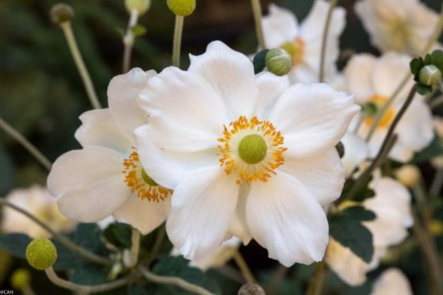 flowers-st-johns-garden-london-11-sept-2016-1