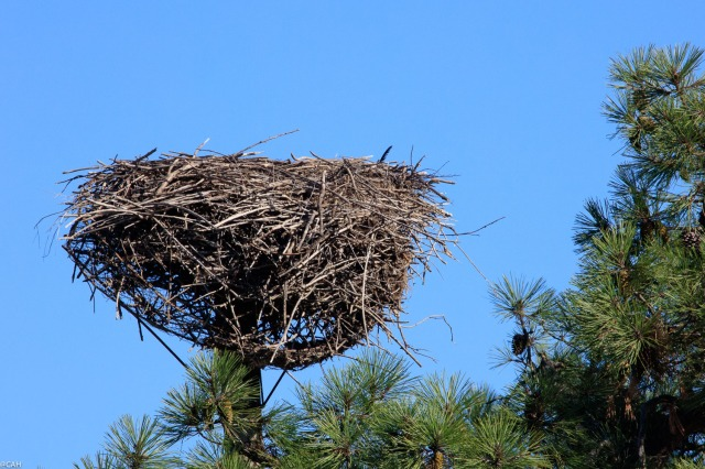 stork-nest-parc-ornothologique-du-teich-23-sep-2016-1