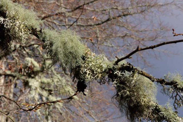 lichen-1-5-feb-2017-1-of-1